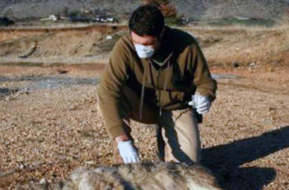 Έγκριση δαπάνης και έγκριση όρων διακήρυξης ανοικτού διεθνή διαγωνισμού περισυλλογής και διαχείρισης νεκρών ζώων και κατασχεθέντων προϊόντων.