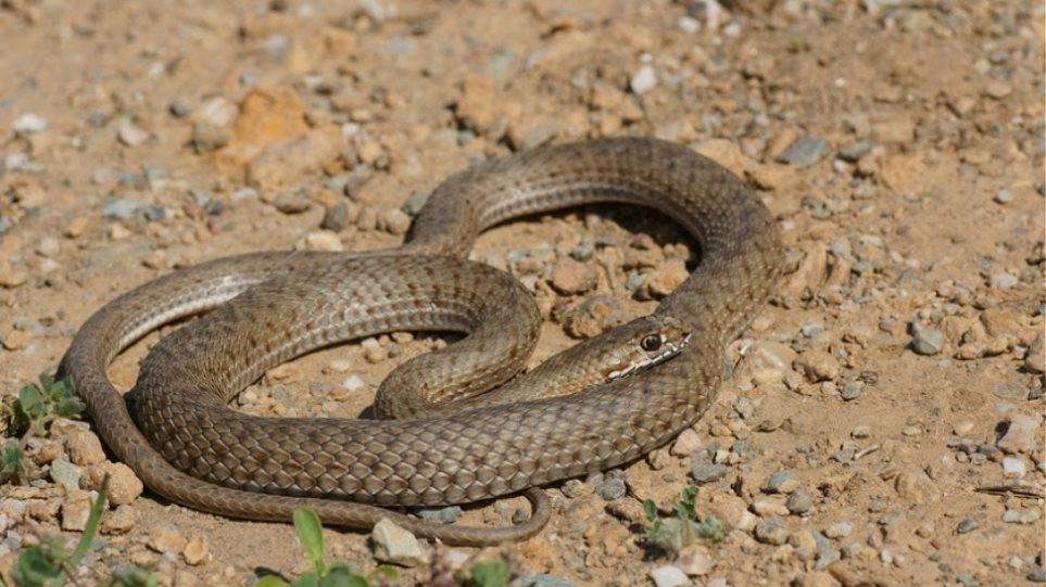 Μετά τα αγριογούρουνα, φίδια έκαναν την εμφάνισή τους στη Θεσσαλονίκη