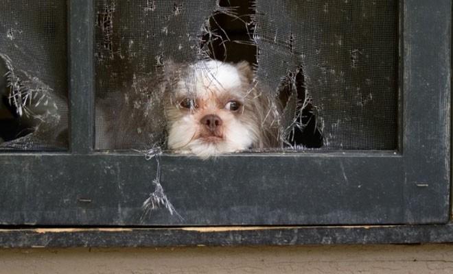 Οι επιστήμονες αποκαλύπτουν τι συμβαίνει στον σκύλο μας όταν μένει μόνος του όλη την ημέρα