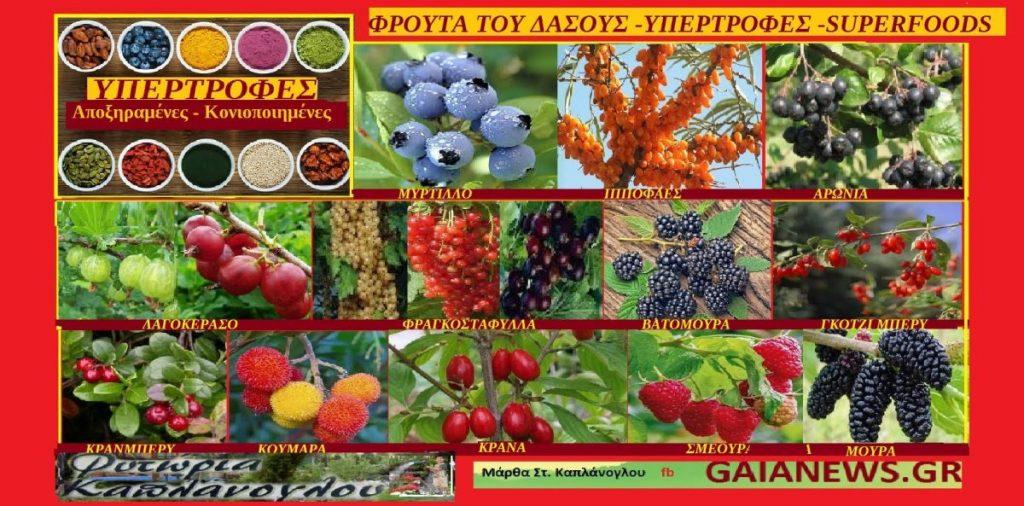 Υπερτροφές- superfoods (από φρούτα του δάσους )