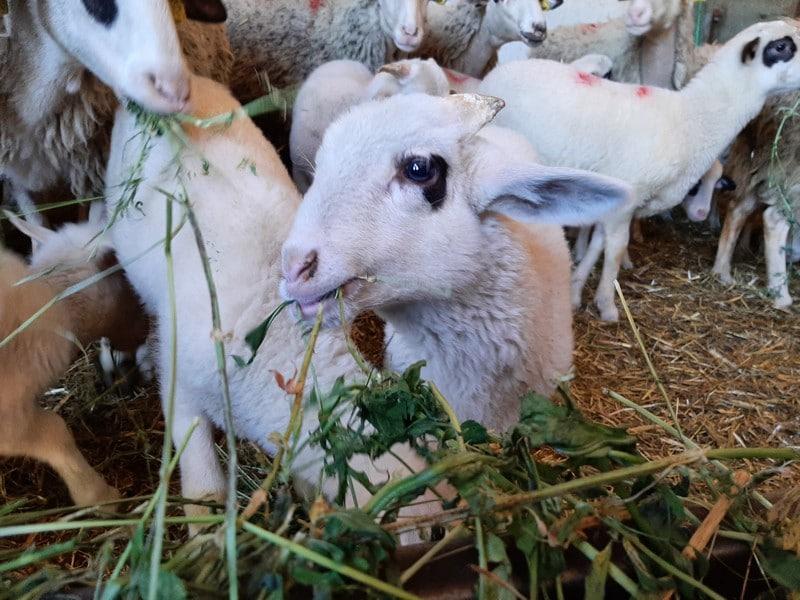 Η Φλώρινα είναι ένας νομός με ανεπτυγμένη κτηνοτροφία και αιγοπροβατοτροφία, όμως δεν είχε μονάδα μεταποίησης των προϊόντων, ώστε να αξιοποιηθεί άμεσα και αποτελεσματικά η ποιοτική πρώτη ύλη. Πλέον, μέσω της εταιρείας των Γιαλαμά – Δημητρίου, η Φλώρινα απέκτησε τη δική της εταιρεία μεταποίησης γαλακτοκομικών, παράγοντας πολλούς και σημαντικούς κωδικούς, με ιδιαίτερη απήχηση στο νομό και ευρύτερα. Επόμενος σταθμός στη γευστική περιήγηση ήταν οι εγκαταστάσεις παραγωγής τοπικών φασολιών, ένα προϊόν που επίσης θεωρείται από τα ισχυρά brand της Φλώρινας.