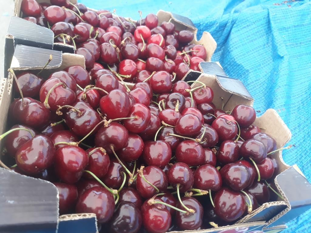 Εορδαία: Κατακόρυφη μείωση στην παραγωγή κερασιών
