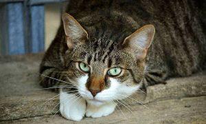 Βόλος: Σκότωσε γάτα και την πέταξε στα σκουπίδια – Θα πληρώσει 30.000 ευρώ