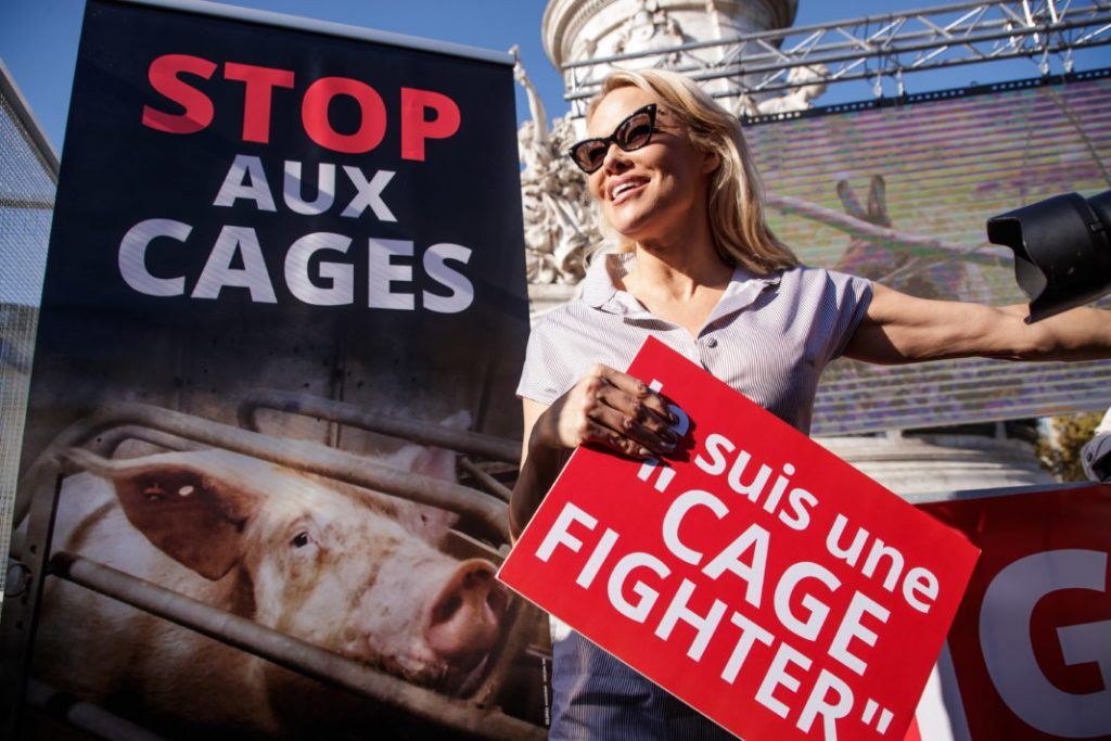 Πρόταση της Κομισιόν για τη σταδιακή κατάργηση των κλουβιών για τα εκτρεφόμενα ζώα