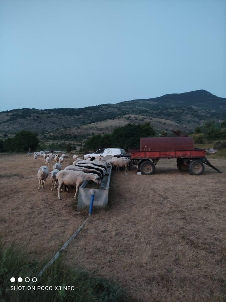 Μεσόβουνο Εορδαίας: Επιστράτευσαν ''τρακτέρ'' οι κτηνοτρόφοι για να ποτίσουν τα ζωντανά τους! - Για αδιαφορία καταγγέλλουν τον Πρόεδρο της Τ.Κ