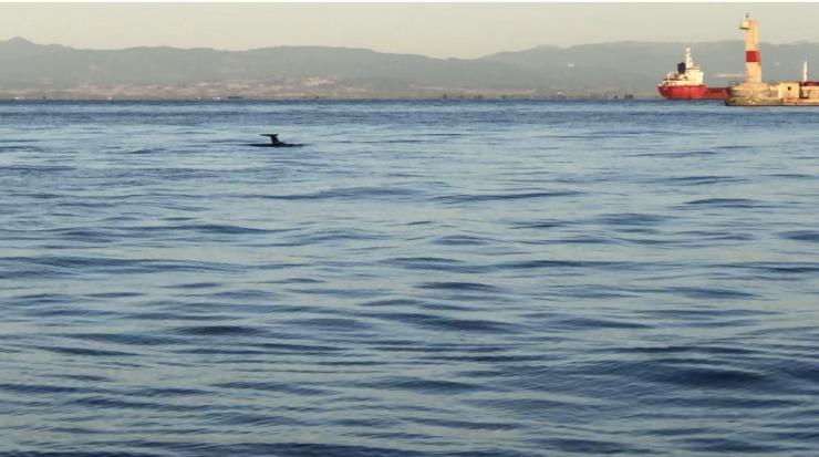 Μεγαλόσωμα δελφίνια τράβηξαν τα βλέμματα στην παραλία της Θεσσαλονίκης