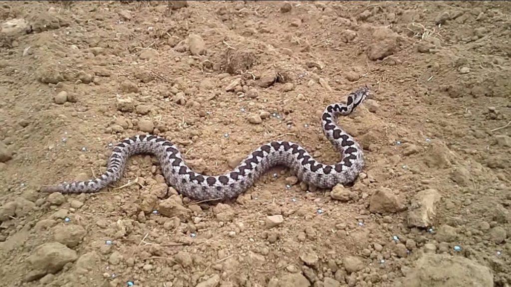 Όλη η αλήθεια για τα φίδια της Ελλάδας από την Ελληνική Ερπετολογική Εταιρεία