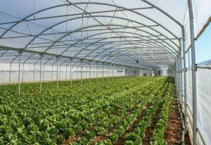 Πτολεμαΐδα: Θερμοκήπια και λαχανόκηποι στο 1ο ΕΠΑ Λ
