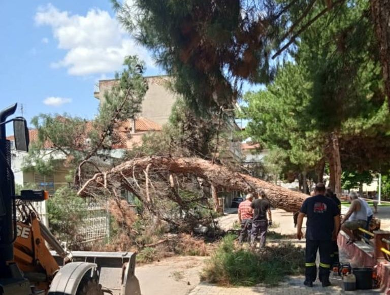 Πτολεμαΐδα: Αναστατώθηκαν κάτοικοι από την πτώση μεγάλου δέντρου στο πάρκο Χρηστίδη