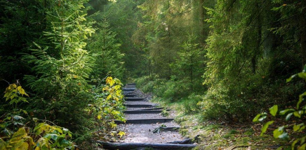 Παράταση απαγόρευσης κυκλοφορίας σε δάση, εθνικούς δρυμούς, περιοχές Natura και άλση