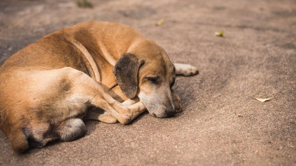 N/σ: Υποχρεώσεις ιδιοκτήτη ζώου συντροφιάς -Οι κανόνες, τα πρόστιμα, οι δήμοι & οι αντιδράσεις