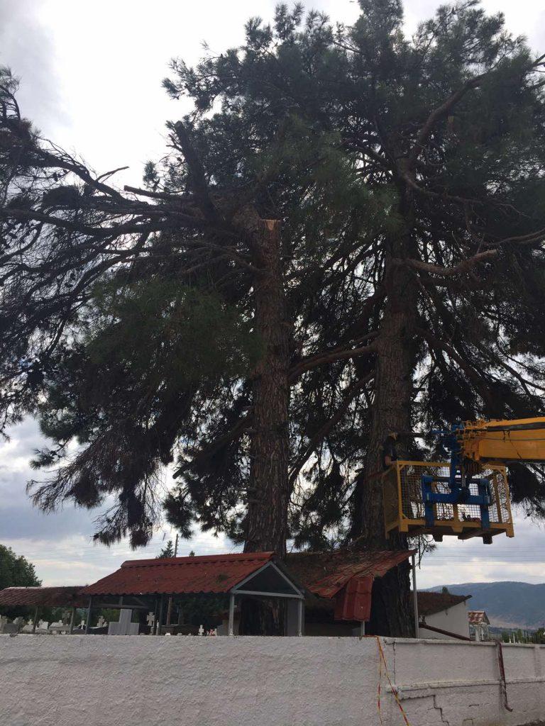 eordaialive.com: Πτολεμαΐδα - Κοπή επικίνδυνων δέντρων (βίντεο)