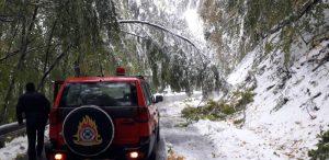 Μπάλλος: Πέφτουν δέντρα στο Βίτσι – Οδηγός απεγκλωβίστηκε από την Πυροσβεστική (εικόνες)