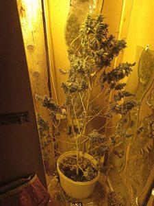 Από αστυνομικούς του Τμήματος Ασφάλειας Φλώρινας πραγματοποιήθηκαν στοχευμένοι αστυνομικοί έλεγχοι για την καταπολέμηση της διάδοσης ναρκωτικών ουσιών