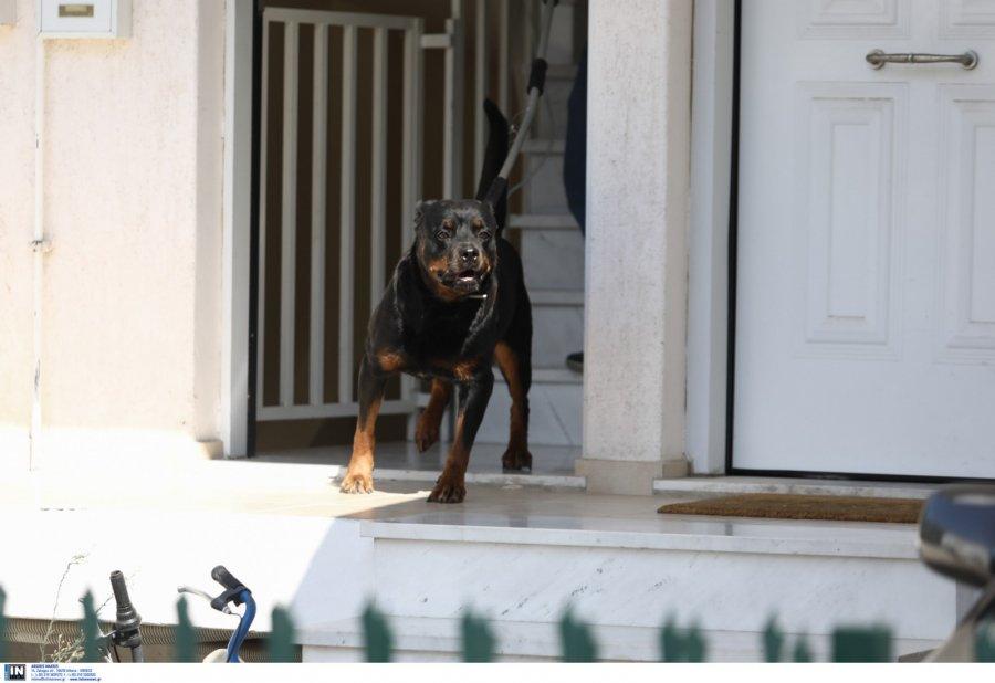 Θεσσαλονίκη: Σκύλος δάγκωσε 4χρονο κοριτσάκι
