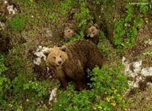 Κοζάνη: Αρκούδα δάγκωσε κυνηγό